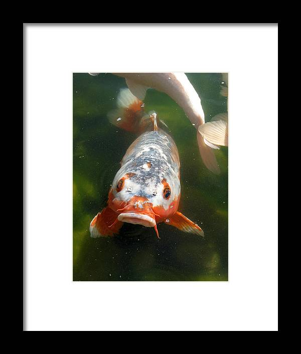 Fish Framed Print featuring the photograph Feed Me by Laurel Powell