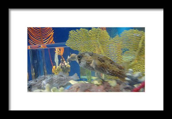 Fish Framed Print featuring the photograph Fish by Tinjoe Mbugus
