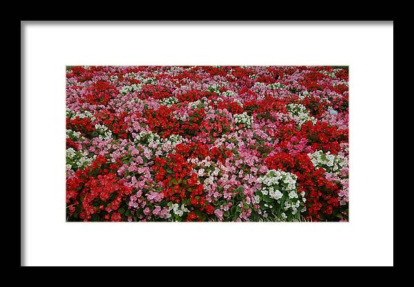 Flowers Framed Print featuring the photograph Flower Bed by Tinjoe Mbugus