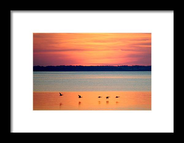 Beach Bum Pics Framed Print featuring the photograph Flying North - Wildlife Lighter by William Bartholomew