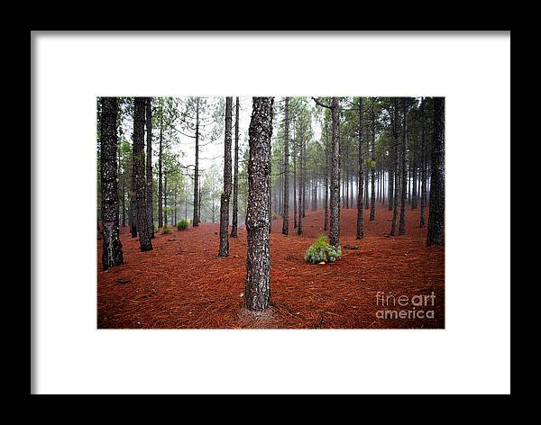 Autumn Framed Print featuring the photograph Foggy Landscape by Kati Finell