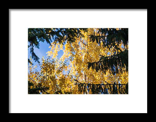 Abstract Framed Print featuring the photograph Forest Tale - Featured 3 by Alexander Senin
