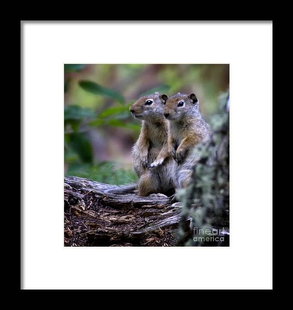 Squirrels Framed Print featuring the photograph Friends by Carolyn Fox