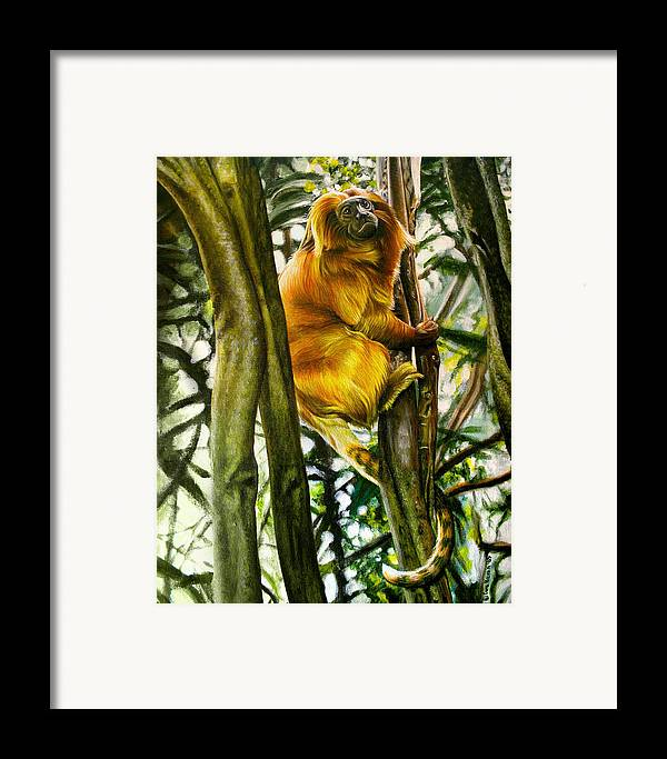 Tamarin Framed Print featuring the painting Gold Mane by Cara Bevan