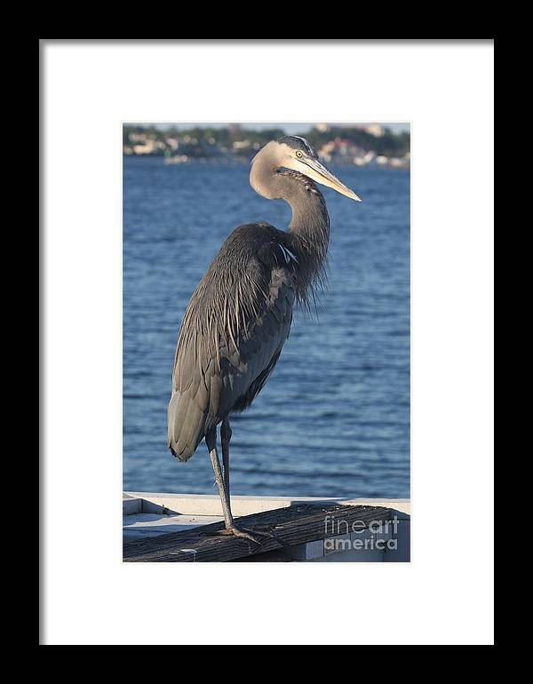 Heron Framed Print featuring the photograph Great Blue Heron by Christiane Schulze Art And Photography
