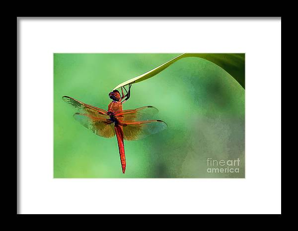 Dragonfly Framed Print featuring the photograph Hanging On by Patrice Dwyer