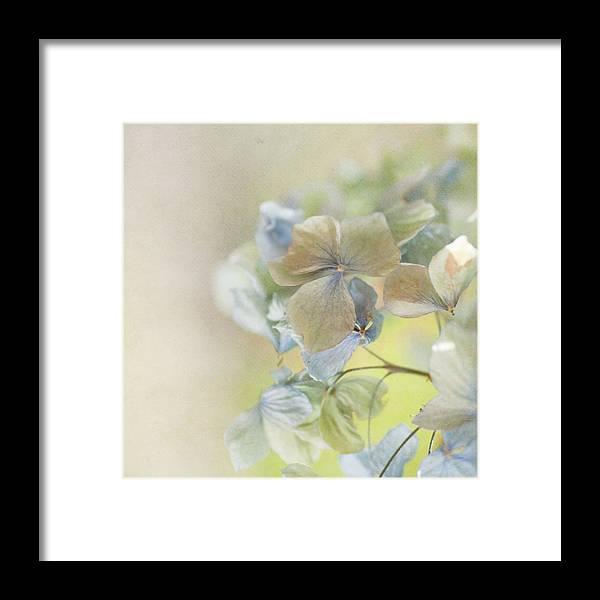 Hydrangea Framed Print featuring the photograph Hydrangea by Jill Ferry