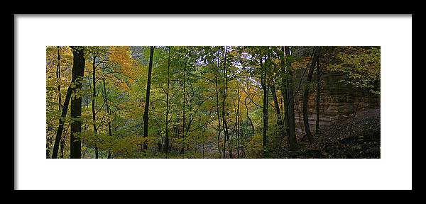 Forest Photographs Framed Print featuring the photograph Illinois Canyon by Gary Lobdell