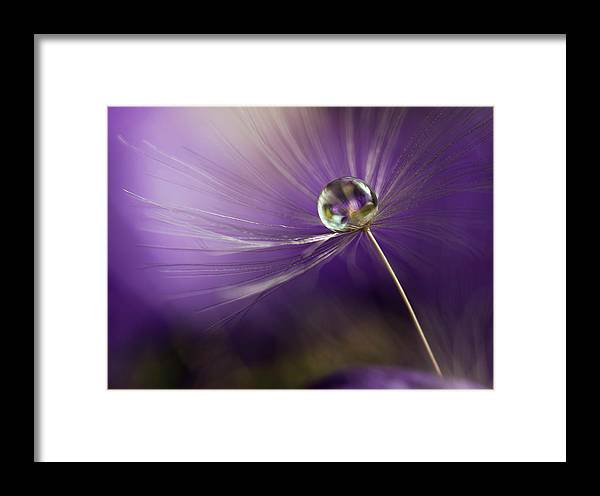 Macro Framed Print featuring the photograph In Shades Of Purple by Heidi Westum