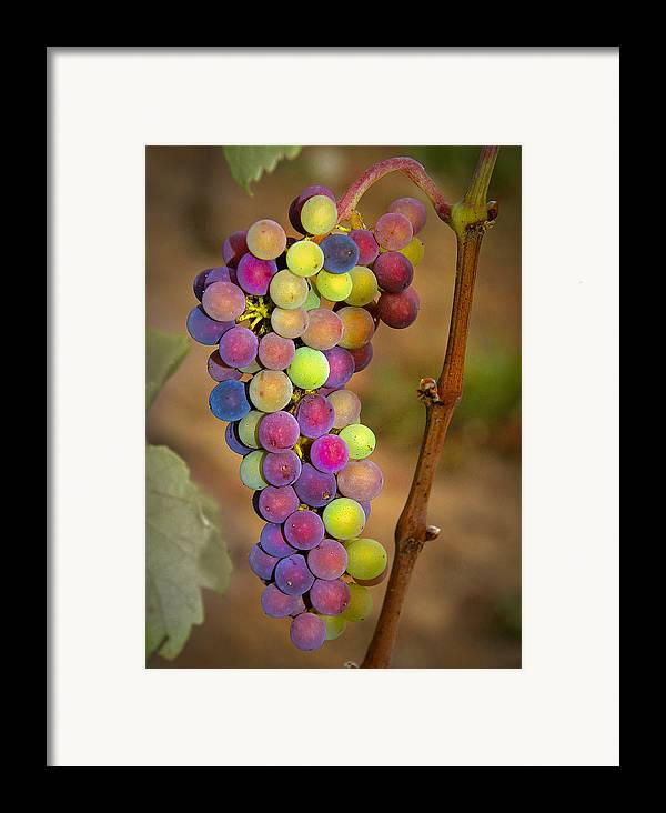 Grapes Framed Print featuring the photograph Jewel Tones by Jean Noren