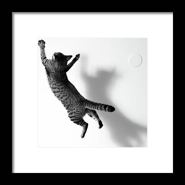 Pets Framed Print featuring the photograph Jumping Cat by Akimasa Harada