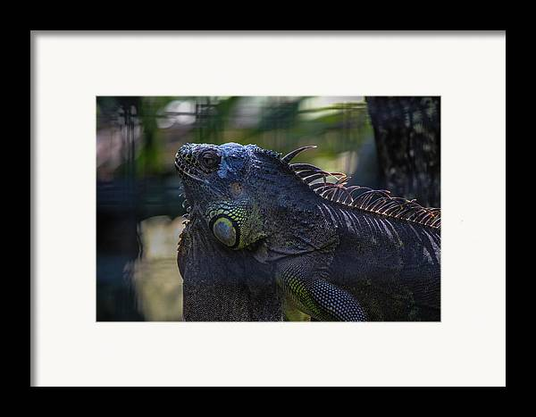 Nature Framed Print featuring the photograph Just Chillin by Lesley Brindley