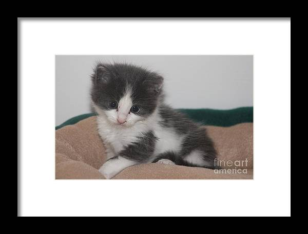 Pets Framed Print featuring the photograph Little Scarlow by Michelle Powell