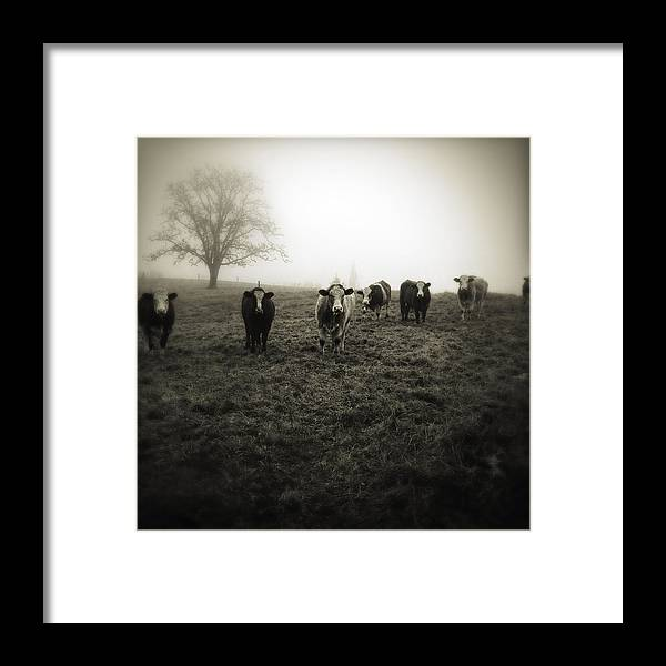 Fog Framed Print featuring the photograph Livestock by Les Cunliffe