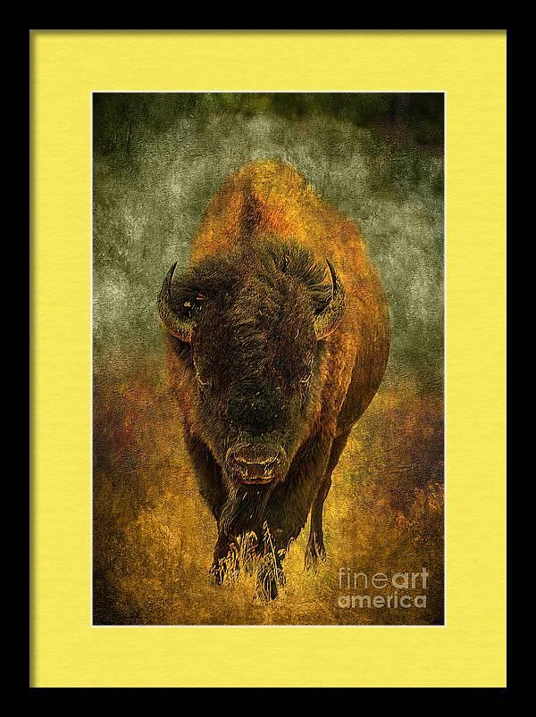Lone Buffalo by Cindy Singleton