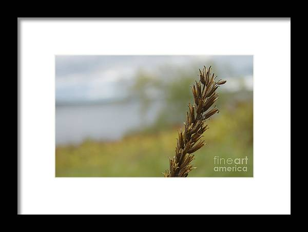 Lonely Wildflower Framed Print featuring the photograph Lonely Wildflower by Jolanta Meskauskiene
