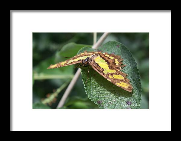 Butterfly Framed Print featuring the photograph Looking At You by Bill Spittle