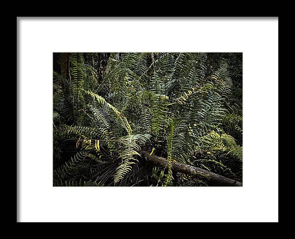 Arthur R. Marshall Framed Print featuring the photograph Loxahatchee Refuge-4 by Rudy Umans