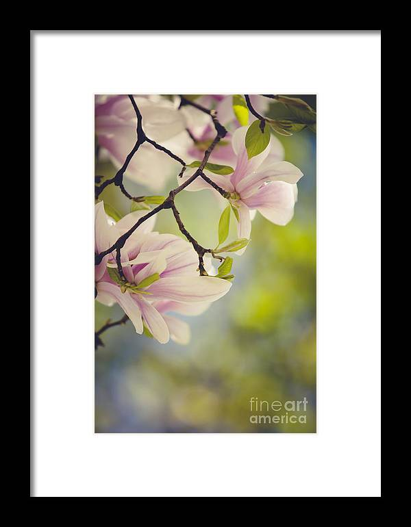 Magnolia Framed Print featuring the photograph Magnolia Flowers by Nailia Schwarz