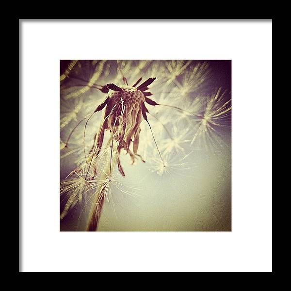Wish Framed Print featuring the photograph #mgmarts #dandelion #makeawish #wish by Marianna Mills