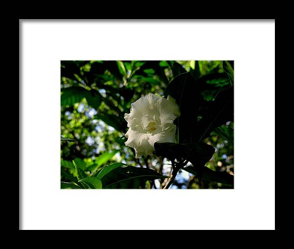 Floral Framed Print featuring the painting Milky Way Tree by Fineartist Ellen