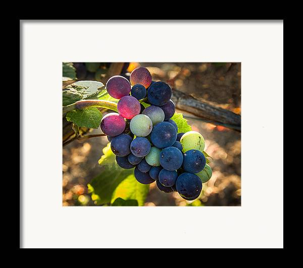 Vineyard Framed Print featuring the photograph Mosaic by Jean Noren