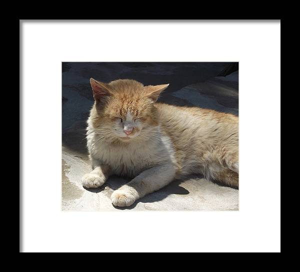 Cat Framed Print featuring the photograph Nap by Radoslava Atanasova