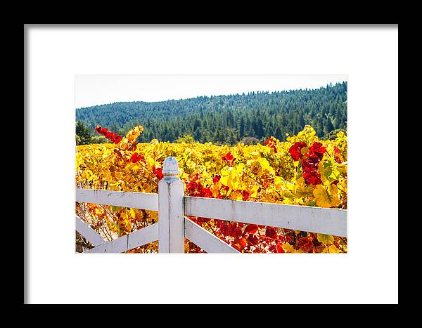 Napa Framed Print featuring the photograph Napa Fall Grapes by Brian Williamson