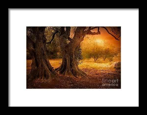 Aged Framed Print featuring the photograph Old Olive Tree by Mythja Photography