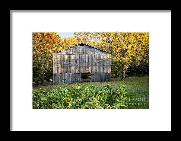 America Framed Print featuring the photograph Old Tobacco Barn by Brian Jannsen