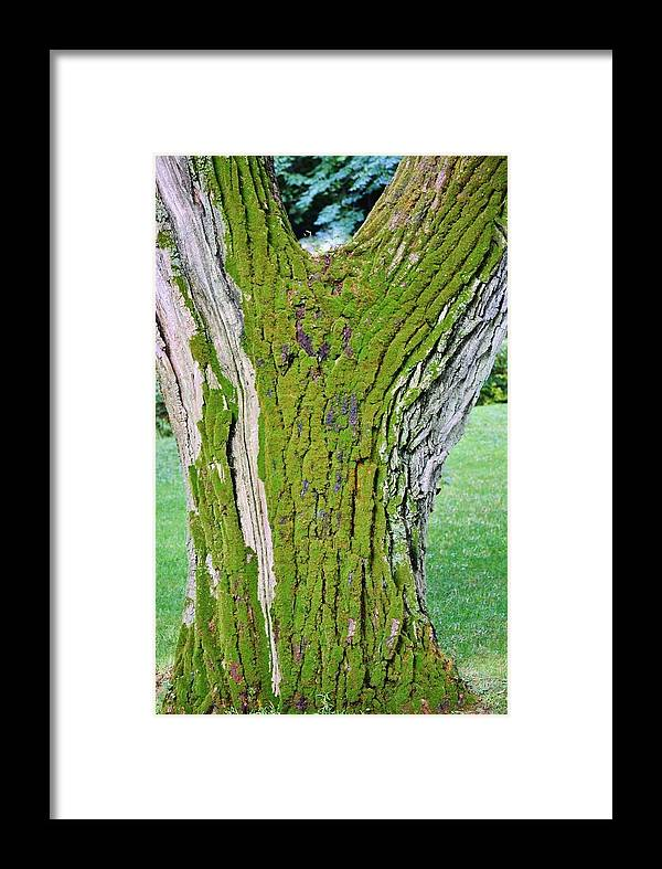Close Up; Old; Tree; Stem; Moss; Green; Bark; Rain; Garden; Background; Wind; Decorative; Detail; View; Weather; Framed Print featuring the photograph Old Tree by Werner Lehmann