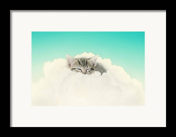 Kitten Framed Print featuring the photograph On Cloud Nine by Amy Tyler