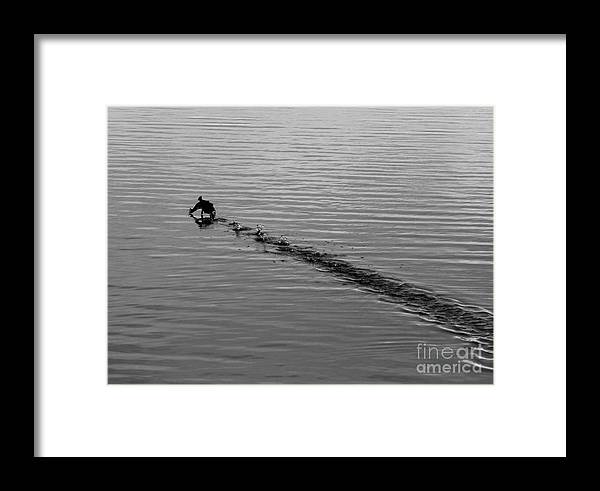 Duck Framed Print featuring the photograph On The Run by Steven Parker
