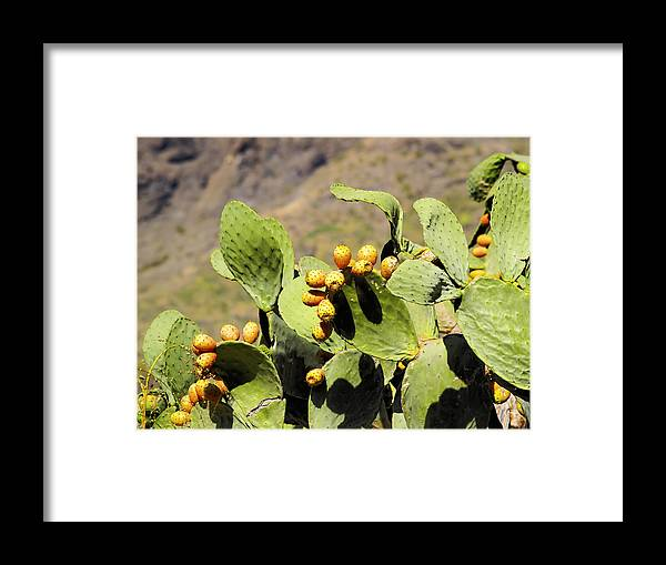Opuntia Framed Print featuring the photograph Opuntia Ficus-indica by Karol Kozlowski