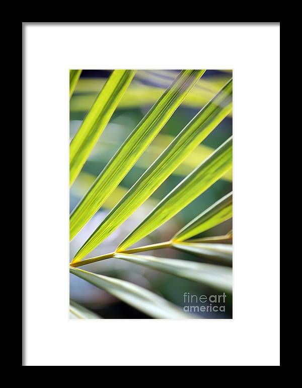 Palm Framed Print featuring the photograph Palm Leaves Pattern by Konstantin Sutyagin