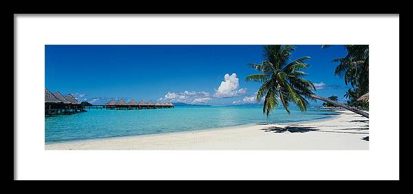Photography Framed Print featuring the photograph Palm Tree On The Beach, Moana Beach by Panoramic Images