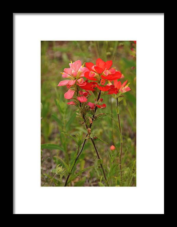 Wildflowers Framed Print featuring the photograph Perfectly Paired by Lynn Bauer