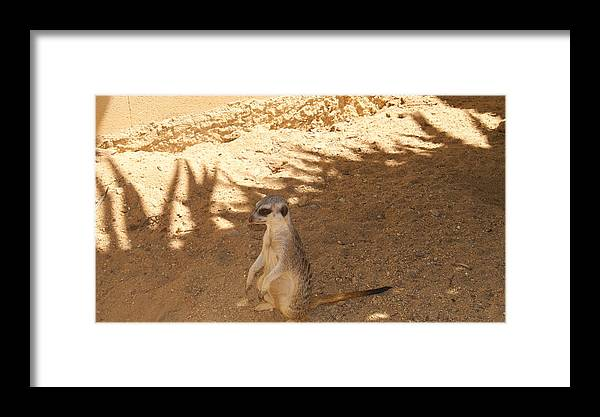 Zoo Framed Print featuring the pyrography Photography by Viorica Bivol