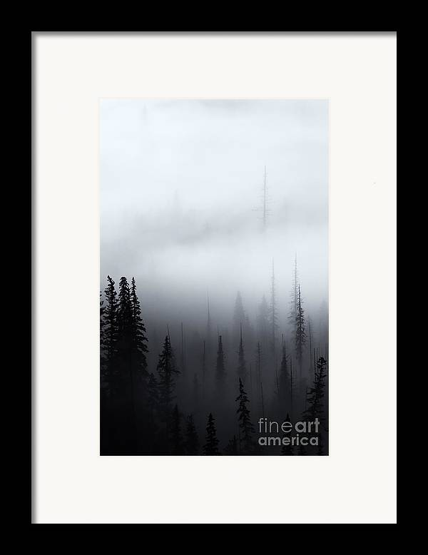 Forest Framed Print featuring the photograph Piercing The Clouds by Mike Dawson