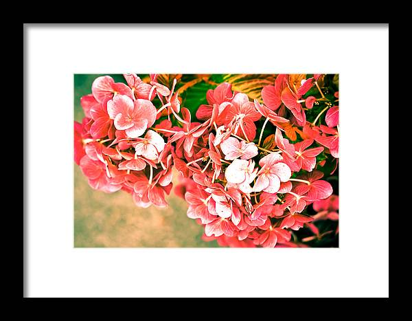 Autumn Framed Print featuring the photograph Pink Hydrangea by Ronda Broatch
