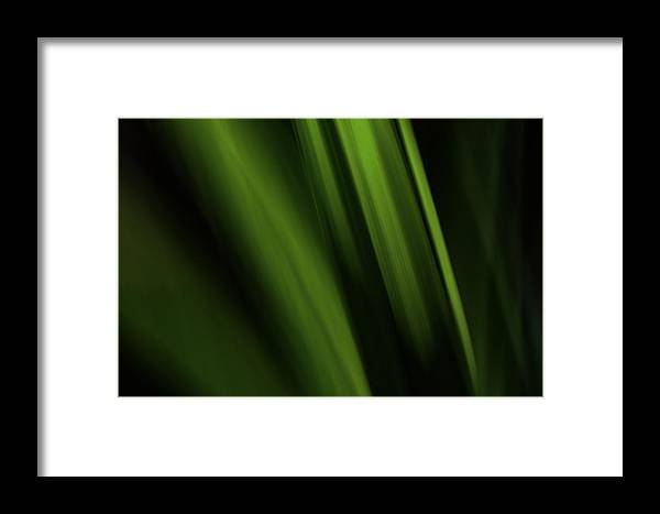 Nature Framed Print featuring the photograph Plant Abstract by Antonio Oquias