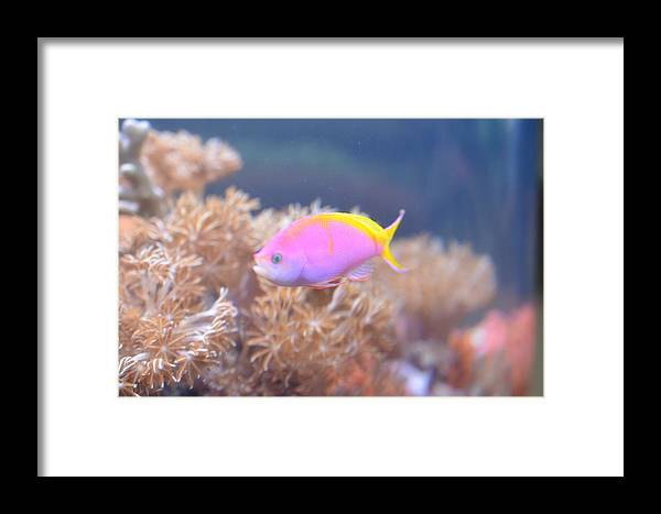 Fish Framed Print featuring the photograph Pretty In Pink by Chandra Wesson