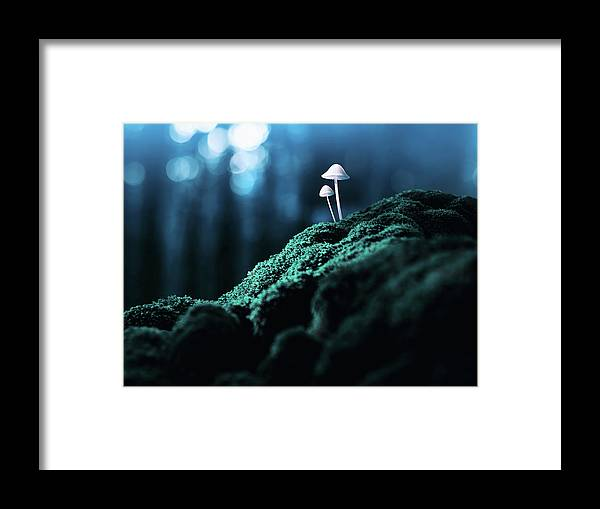 Scenics Framed Print featuring the photograph Psychedelic Mushrooms by Misha Kaminsky