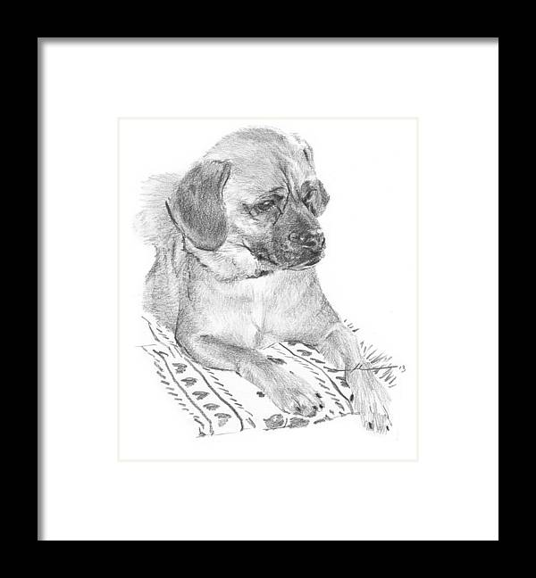 <a Href=http://miketheuer.com Target =_blank>www.miketheuer.com</a> Puppy On A Blanket Pencil Portrait Framed Print featuring the drawing Puppy On A Blanket Pencil Portrait by Mike Theuer
