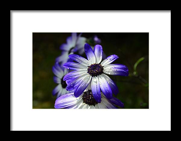 Purple Framed Print featuring the photograph Purple Flower by Barbara Walsh