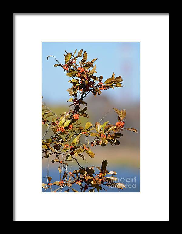 Tree Berry Prints Framed Print featuring the photograph Red Berries by Ruth Housley