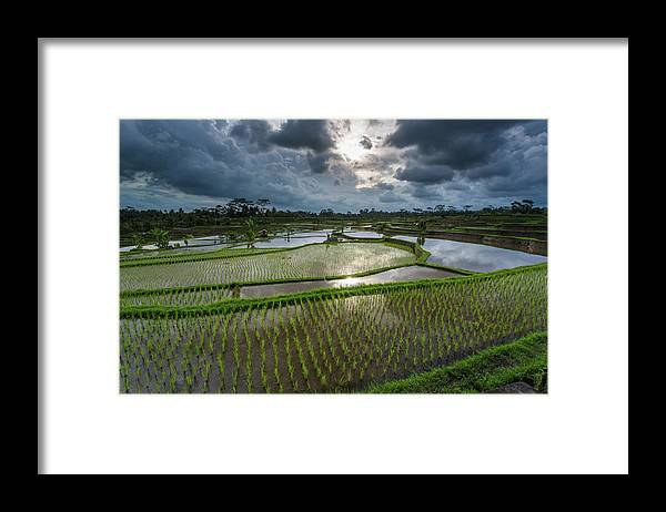 Tranquility Framed Print featuring the photograph Rice Terraces In Central Bali Indonesia by Gavriel Jecan