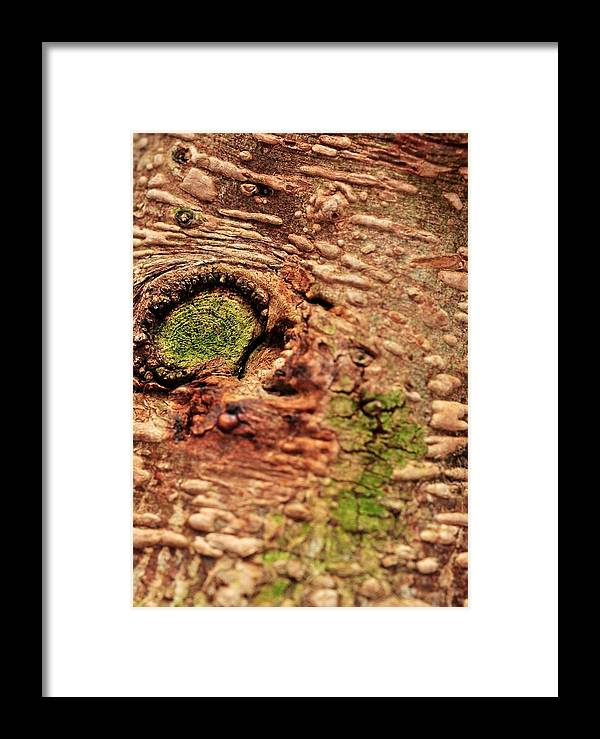 Roots Framed Print featuring the photograph Roots Of A Money Tree by Puzzles Shum