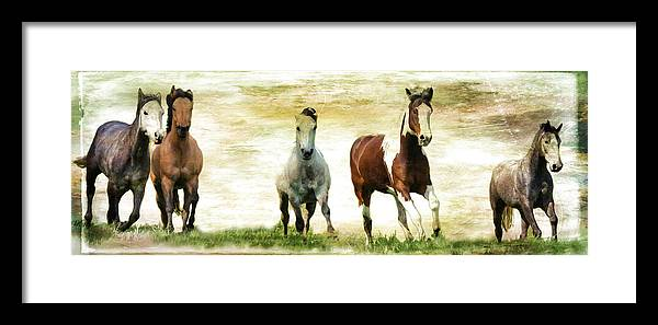 Horses Framed Print featuring the photograph Running Wild by Athena Mckinzie