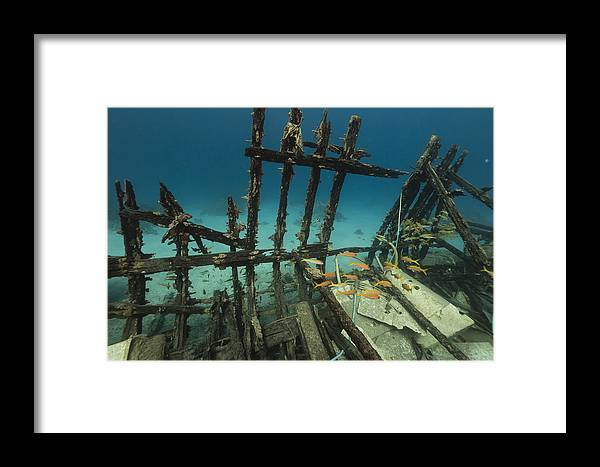 Animal Framed Print featuring the photograph Safari Boat Wreckage And Aquatic Life In The Red Sea. by Stephan Kerkhofs